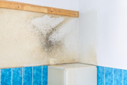 Leistungen Steinhilber – Schimmel Sanieren